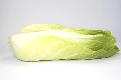 cicoria - colture - Fertilgest