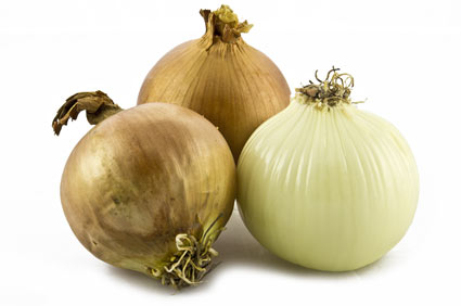Cipolla - colture - Fertilgest