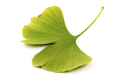 ginkgo - colture - Fertilgest