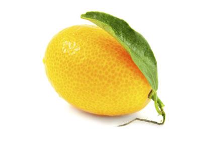 kumquat-tree - colture - Fertilgest