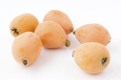 nespolo-del-giappone - colture - Fertilgest