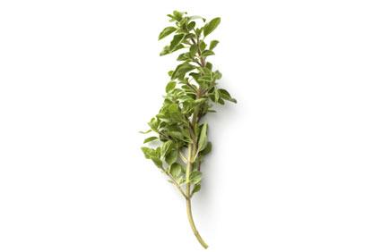 origano - colture - Fertilgest