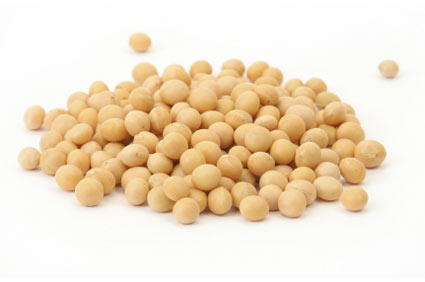 soya-soybean - colture - Fertilgest