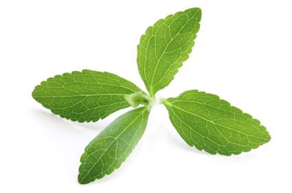 stevia - colture - Fertilgest