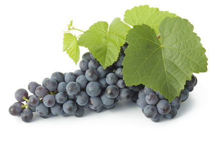 wine-grape - colture - Fertilgest