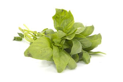 basilico - colture - Fertilgest