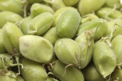 Cece - Coltivazione e fertilizzanti consigliati - Colture - Fertilgest